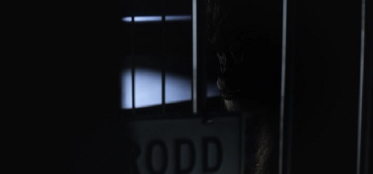 gorilla-grodd-112510
